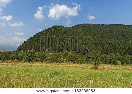 Sunlit mountain top overgrown with coniferous forest and glade of Rila mountain, Bulgaria