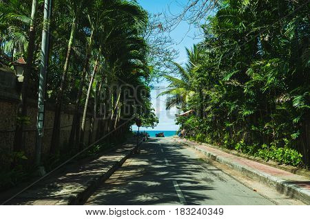 Empty narrow street with tropical palm trees and a magical view of the turquoise ocean. Morning on a tropical beach. Travel to the island.