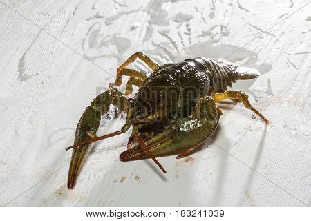 Live Crawfish On A Wooden Board