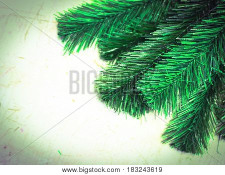 Old Scratched Grungy White Painted Wooden Background With Fir Tree Branches