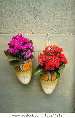 Dutch clogs flower pots hanging on garden wall with flowers