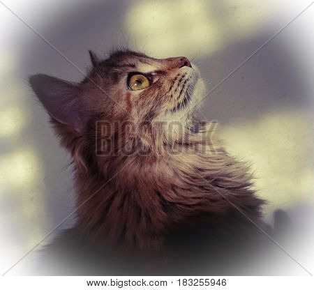 Cute profile of fluffy cat close-up. The head of the kitten raised upwards. On the light wall are wide shadows. Portrait of a cat with a white vignette