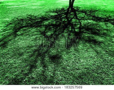Tree shadow in spring time on lush green grass