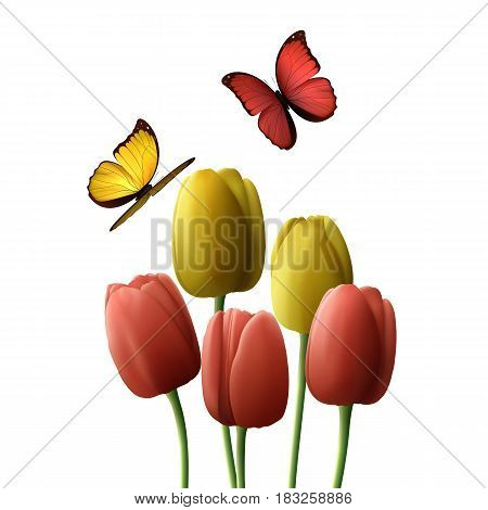 Flower tulip realistic isolated on white background. Yellow red tulips with butterfly