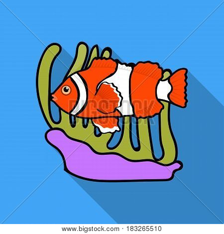Clownfish and anemone icon in flat design isolated on white background. Australia symbol stock vector illustration.