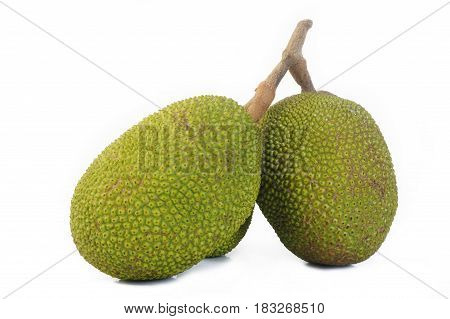 Jackfruit on white background , young Jackfruits , tropical fruit , Jackfruit
