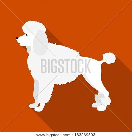 Poodle vector illustration icon in flat design