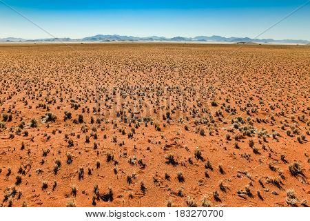 Great view over red desert plain towards bluish mountain range. Millions of little tussocks of grass are evenly spread in that desert savanna landscape. Namibia, Africa.