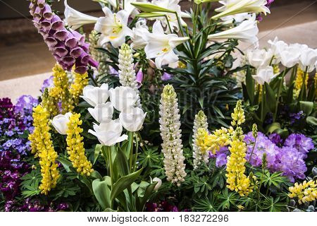 flowers, flowers concept, natural flowers, viola flowers, flowers of the spring, white and yellow flowers with blurry background, spring flower, flowers in the vase, different flowers,