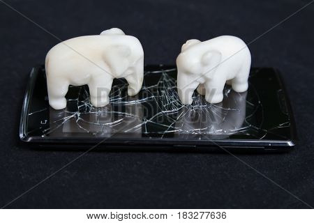 An elephant trampled and broke a mobile phone