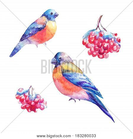 Set of watercolor bullfinches and rowan's berry. Hand painted illustrations isolated on white. Drawings suitable for sticker design of winter products snow cristmas scene.