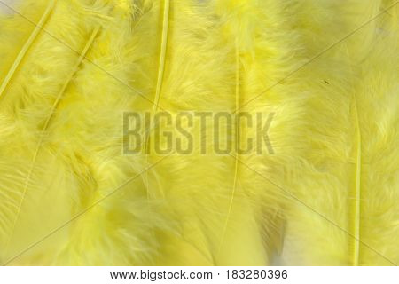 This is a photograph of vibrant Yellow craft feathers background