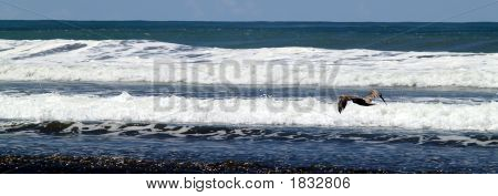 flying seagull at a beach in the pacific ocean poster