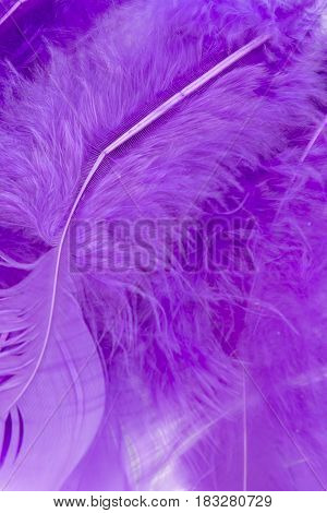 This is a photograph of Purple craft feathers