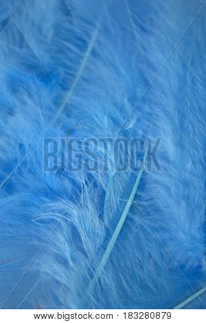This is a photograph of Blue craft feathers background