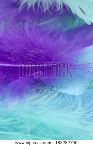 This is a photograph of BlueGreen and Purple craft feathers background