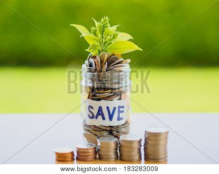 abstract money saving small baby tree with glass jar Coins with stack coins on table with green tree background