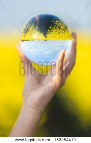 Young woman hand holding a crystal ball in a field of yellow flowers