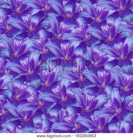 Seamless infinite background floral. Purple-blue flowers lily. For design and printing. Background of natural flowers.