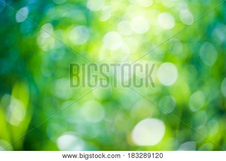 Green bokeh natural background, fresh green trees foliage on bright sunny day, beautiful wallpaper, spring and summer time nature