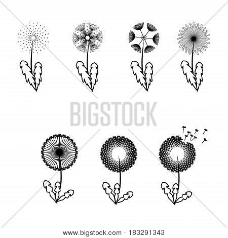 Dandelion flowers with fluffy seeds black floral vector silhouettes isolated on white. Blowball fragile and illustration of black blowball fluffy