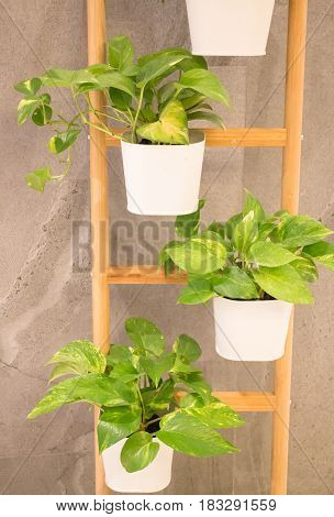 Green Plant In Minimal Room Style stock photo