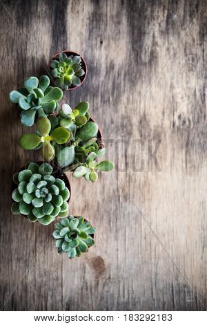 Green house plants potted, succulents in a basket on old vintage wooden background. Home gardening, close-up with copyspace. Scandinavian rustic style decor.