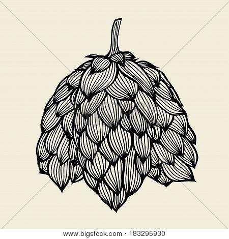 Beer hop illustration. Engraved style illustration. Vintage beer design. Vector illustration