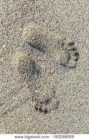 footprint of a person at the beautiful sandy beach