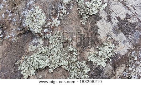 Lichens growing on the tree in the forest