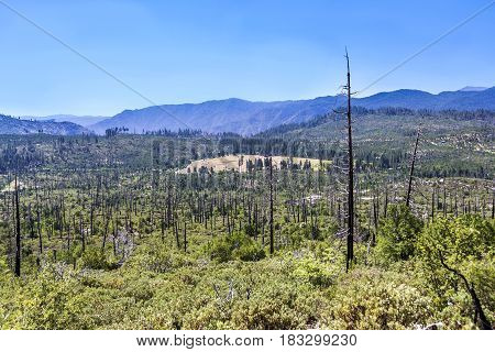 Burned Down Forest In Yosemite National Park