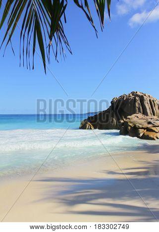 Palm Leaves Tide