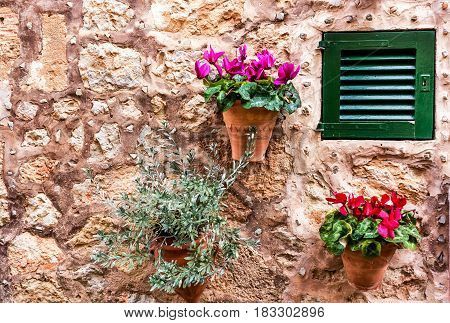 Decorative stone house wall mit potted cyclamen flowers und tiny olive tree
