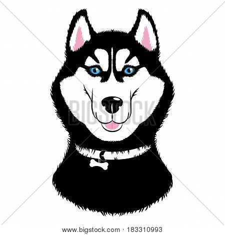 Vector Husky. Dogs of traditional head coloring with a collar. Isolated illustration on white background.