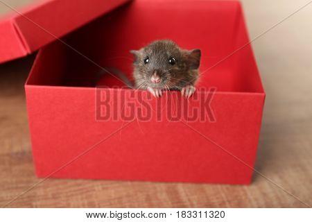Cute funny rat in cardboard box on table
