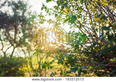 Fresh green leaves on nature framing the sun in the middle and forming rays of light.