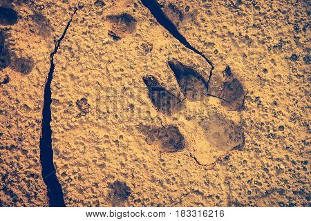 Dog footprints at the cracked ground. Animal footmarks in dried land. Outdoor at the daytime. Nature background. Vignette style. Vintage effect tone.
