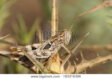 Grasshopper On A Branch