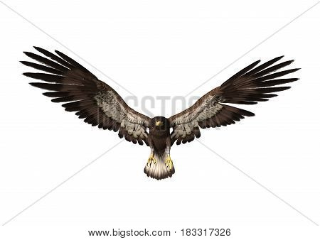 3D Rendering Eagle On White