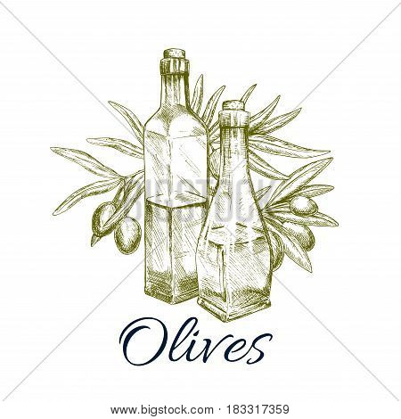 Olive oil bottle with fresh olive branch sketch. Glass bottles of virgin oil with ripe greek olive fruit. Oil label, greek cuisine cookbook, food packaging design
