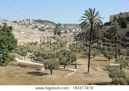 Kidron Valley And Mount Of Olives