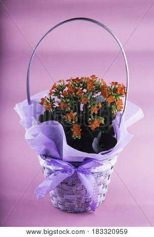 Graceful vase of flowers over pink background vertical image