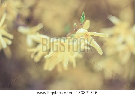 Yellow inflorescence of flowers on a yellow background