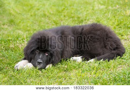 Puppy Dog Relaxing In The Park