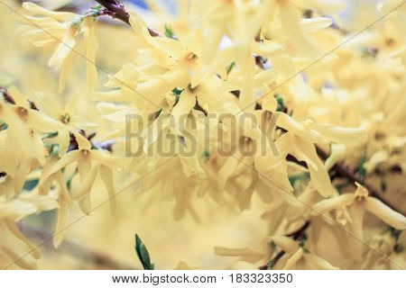 Tender yellow flowers on a yellow background
