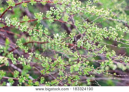 Green bush and small flowers on a green background