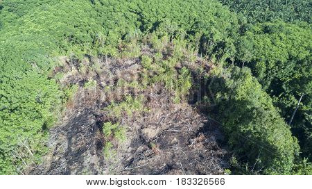 Deforestation. Aerial drone photos of logging environmental destruction of rainforest in Thailand. Forest land cleared for oil palm plantations.