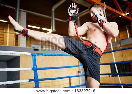 Portrait of shirtless fighter practicing high kick with resistance band belt in boxing ring