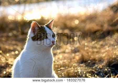 Cat in golden light. Focus on foreground.