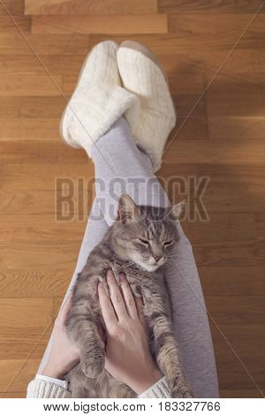 Top view of a furry tabby cat lying on its owner's lap enjoying being cuddled and purring. Selective focus
